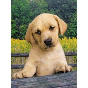 Acheter labrador beige